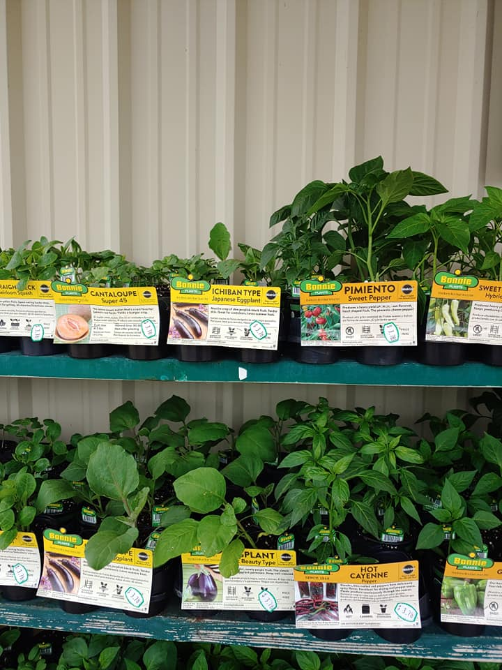 fresh herbs, fruits, vegetables, and other lawn & garden supplies at Arcola Feed