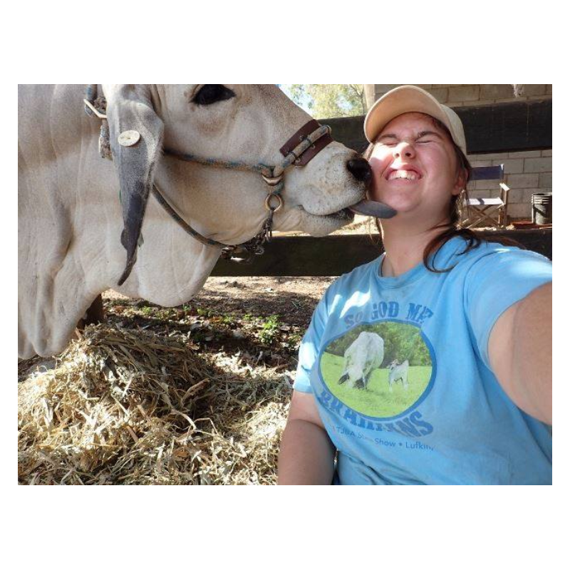 cow licking girl in barn