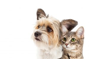 Arcola Feed offers a Frequent Buyer Program on pet foods.