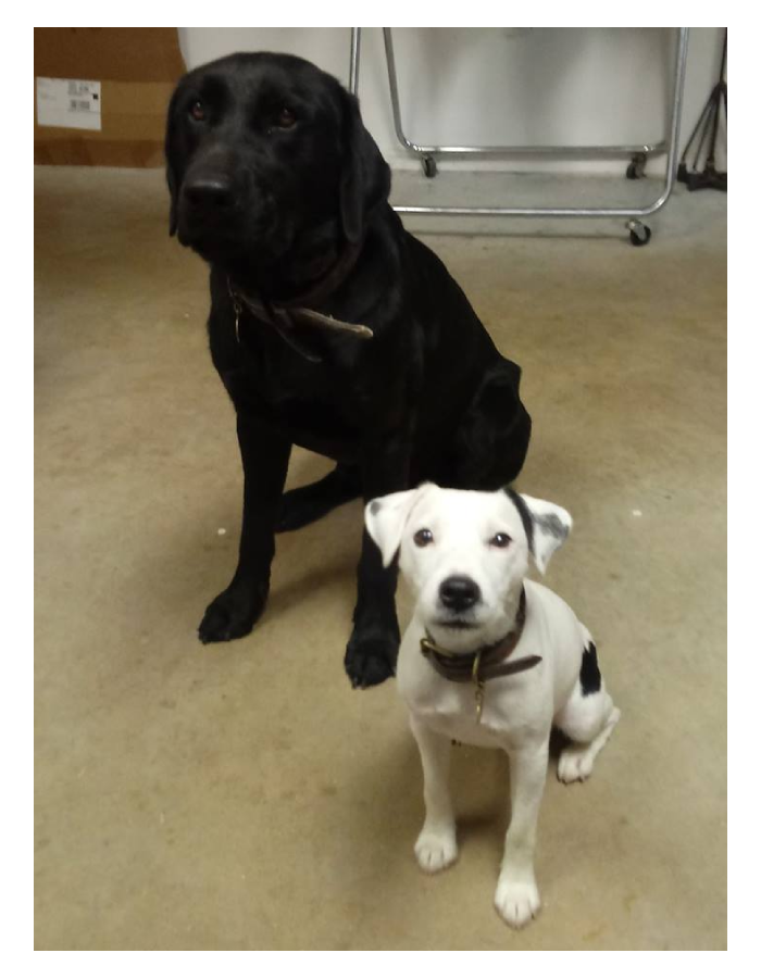 Mouse and duke sitting