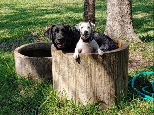 two dogs, Duke and Mouse, in a round cement container outside.